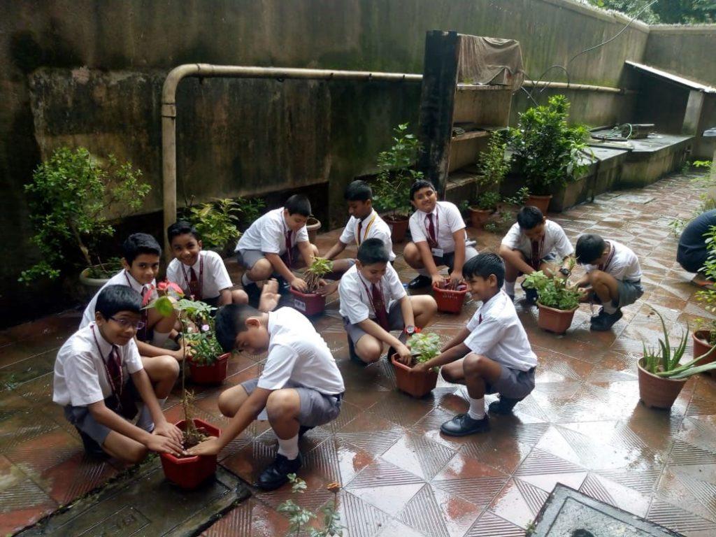 Tree-plantation-4