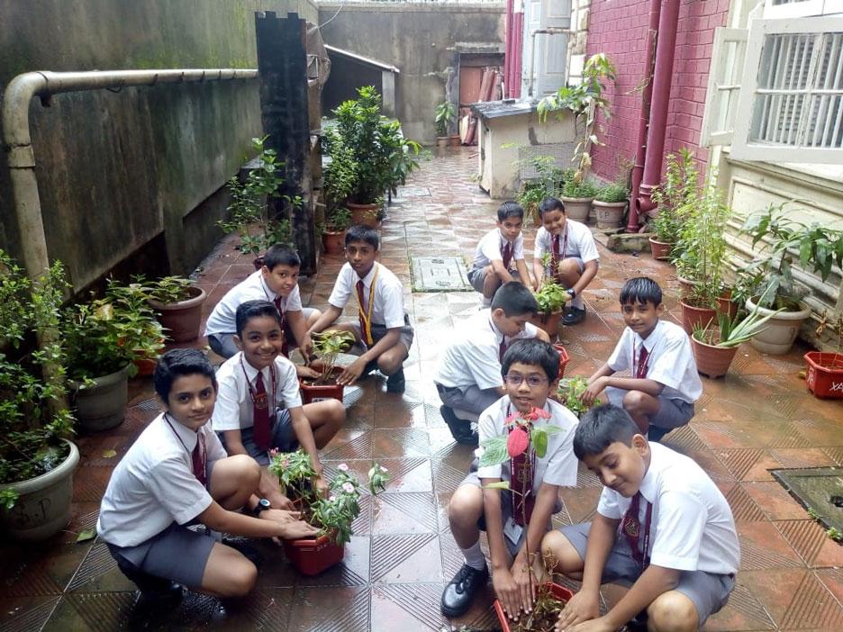 Tree-plantation-7